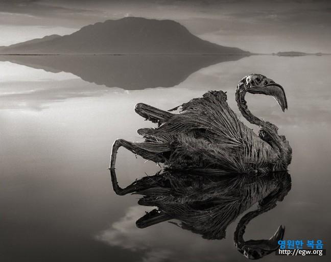 나트론 호수.jpg