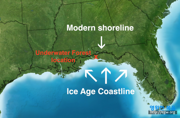 alabama sea forest 7.png
